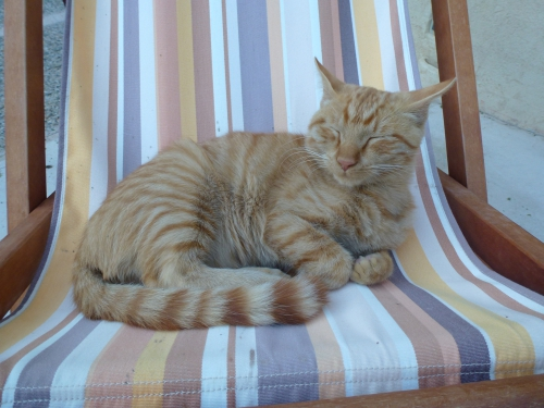 chaton roux, endormi, transat